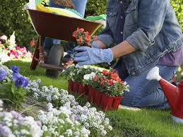 Gardening Picture 19 Secret Gardening Tips That Save Time And Money 13 19