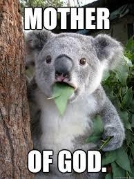 Holy Mother Of God Meme - shocked koala memes quickmeme