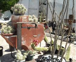 the cactus king cactus and succulent nursery cactus king