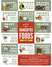 harmful foods for your save one soul animal rescue league