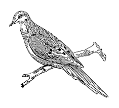 file dove psf png wikimedia commons