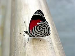 beautiful butterfly desktop wallpapers u2013 one hd wallpaper pictures