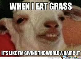 Stoned Meme - stoned goat by sinder meme center