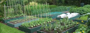 how to grow plants in raised beds thompson u0026 morgan