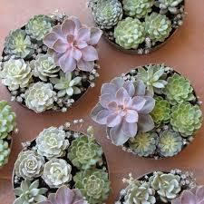 wedding centerpiece ideas succulents succulent wedding