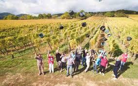 chambre agriculture alsace vigneron indépendant et gérante de chambres d hôte en alsace