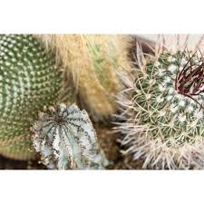 Seeking Cactus Cast How To Treat Cactus Wound Healthfully