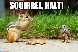 Ewok Memes - squirrel halt squirrel vs ewok meme on memegen
