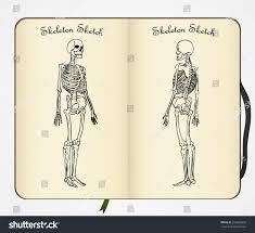 skeleton sketch vector half turned view stock vector 316803659