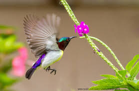 Flower And Bird - this bird visits my flower garden in mumbai india every morning