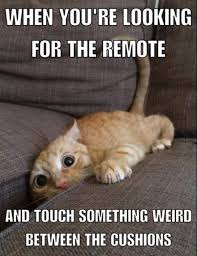 World Memes - 36 hilarious memes for your enjoyment funny gallery ebaum s world
