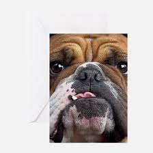 bulldog greeting cards cafepress