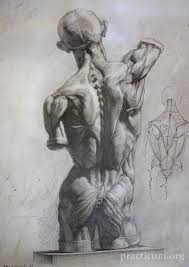 Human Figure Anatomy Best 25 Anatomy Drawing Ideas On Pinterest Human Drawing