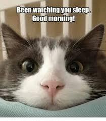Grumpy Cat Meme Good - been watching you sleepl good morning grumpy cat meme on sizzle