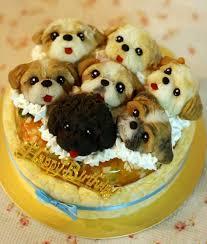 amazing birthday cakes amazing birthday cake for dog oye posts