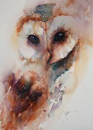 Where Do Barn Owls Live The 25 Best Baby Barn Owl Ideas On Pinterest Beautiful Owl