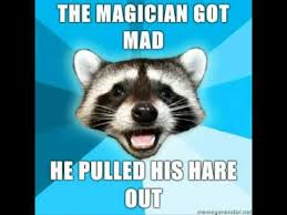 Racoon Meme - lame pun coon know your meme