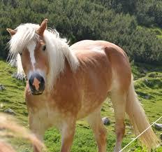 iama horse dentist ama have an upvote arafen