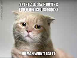 Cat Problems Meme - first world cat problems