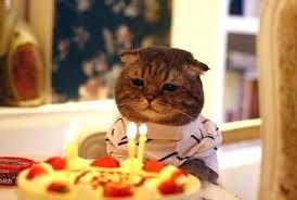 Birthday Meme Cat - birthday cat meme generator