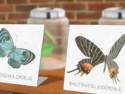 how to raise butterflies with pictures wikihow