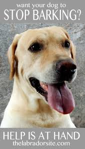 how to train dog to stop barking labrador barking help and information the labrador site