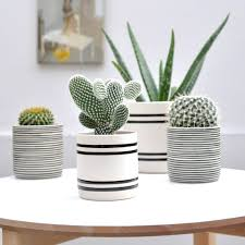 download small succulent pots solidaria garden