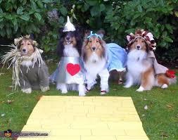 Halloween Costumes Dogs 87 Dog Halloween Costumes Images Animals