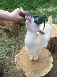 aww yiss muthafuckin sunglasses or bitch i m fabulous imgur