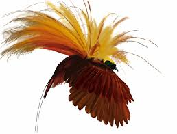 revisiting the birds of paradise mclaughlin design