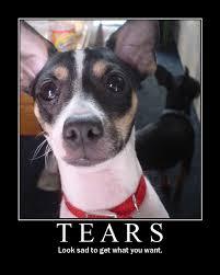 Sad Dog Meme - crying dog meme 28 images look at this dog omg it looks like a