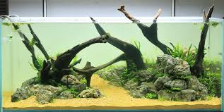Aquascape Layout Driftwood Aqua Rebell