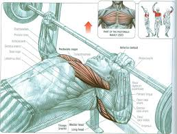 Increase Bench Press Fast Muscle Palace Top 10 Exercises To Build Muscle Mass Gain Muscle