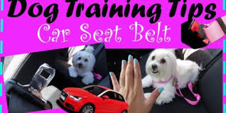 boxer dog training tips boxer dog training tips first month home thedogobedience com