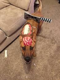 diy zombie dog costume dog costumes pinterest costumes dog