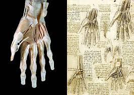 Leonardo Da Vinci Human Anatomy Drawings Leonardo Da Vinci The Mechanics Of Man At The Queen U0027s Gallery