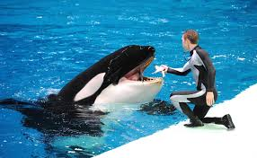 craftsman 25583 100 whale how the killer whale avoids eating people helped