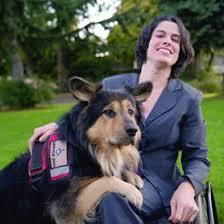 australian shepherd newfoundland training your own service dog new mobility