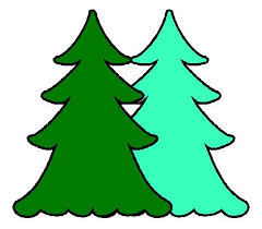 49 best ct grown christmas trees images on pinterest christmas