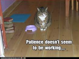 Working Cat Meme - what do cats do all day