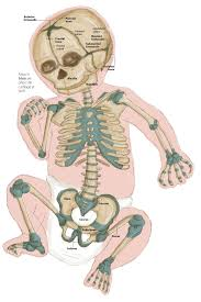 Anatomy Of The Human Skeleton Humans Are Born With Nearly 300 Bones But Most Adults Have Around