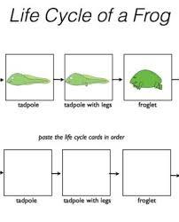 articles worksheets grade worksheet english photo grammar on for
