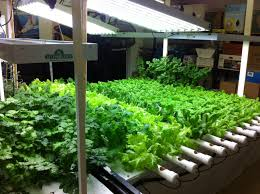 how to setup a hydroponics garden in your home aquaponics
