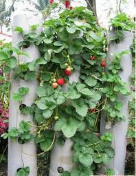 leading star 100pcs red strawberry climbing strawberry fruits