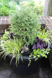 best 25 large garden pots ideas on pinterest large garden
