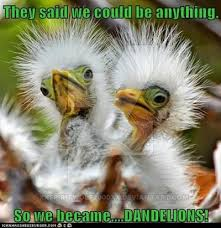 Funny Bird Memes - funny bird meme image by xxspiritwolf2000xx on deviantart