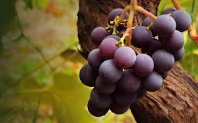 fresh grapes wallpaper 7033236