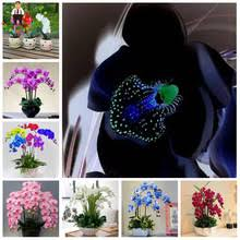 Black Orchid Flower Popular Black Orchid Plant Buy Cheap Black Orchid Plant Lots From