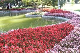 flowers in garden images file flowers in the garden of dolmabahçe palace jpg wikimedia