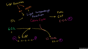 What Happens During The Light Reactions Of Photosynthesis The Calvin Cycle Article Photosynthesis Khan Academy